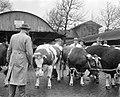 Dikbil Corrie is drie jaar en weegt 820 kilo Twee van de deelnemers op veemarkt, Bestanddeelnr 915-0073.jpg