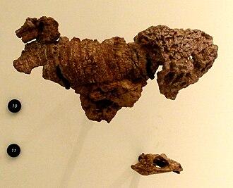 Dissorophus - Dissorophus multicinctus skeleton