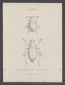 Diversen - Print - Iconographia Zoologica - Special Collections University of Amsterdam - UBAINV0274 027 20 0002.tif