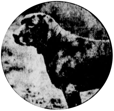 List of individual dogs - Wikiwand
