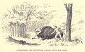 Douglas Hamilton, Plunge knife in bison.jpg