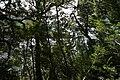 Dove Lake Circuit Walking Track, Cradle Mountain - Lake St Clair National Park 20.jpg