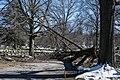 Downed tree - Lake View Cemetery (41459768841).jpg
