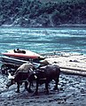 Drina River in Perucac 1966, before dam was built. - panoramio.jpg