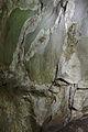 Drobná jeskyně v blízkosti Císařské jeskyně, Ostrov u Macochy, okres Blansko (02).jpg