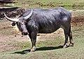 Dubbo Zoo (3146029137).jpg