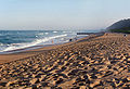 Durban anstey.jpg