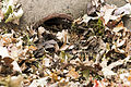 EMD, Help keep JBM-HH storm water clean this fall 141113-A-CD772-001.jpg