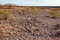 East of the Black Range - Flickr - aspidoscelis (5).jpg