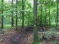 Eco Pfad Altenburg Falkenstein (11).JPG