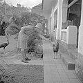 Een militair geeft een pauw een sinaasappel, Bestanddeelnr 255-6971.jpg