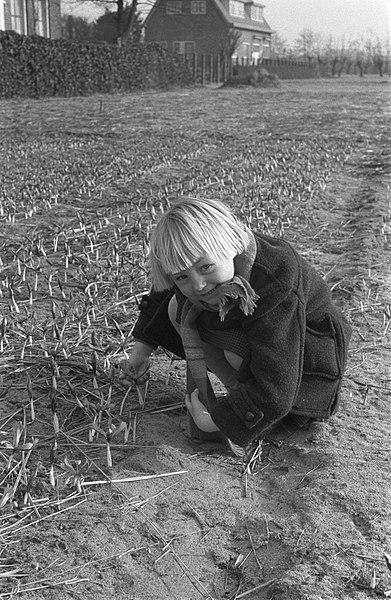 File:Eerste crocusjes in bloei te Overveen, Bestanddeelnr 910-9777.jpg