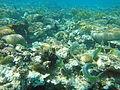 Eilat-coral-beach-reserve-a.JPG