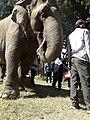 Elephant20171111 122134.jpg