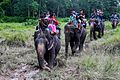 Elephant Safari inside Chitwan National Park.jpg