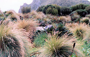 Campbell Island, New Zealand - Image: Elephantseal