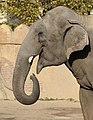 Elephas maximus (6337100159).jpg