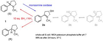 Biocatalysis - Scheme 3. Enantiomerically pure cyclic tertiary amines