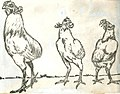 Enciclopedia Chilena - gallo y gallina collonca (cropped).JPG