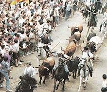 Entrata dei tori nell'encierro di Segorbe
