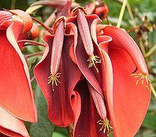 Fabaceae wikipedia la enciclopedia libre for Plantas ornamentales wikipedia