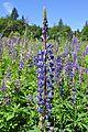 Evans Creek Preserve - 021 - flowers (27390131175).jpg