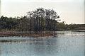 Everglades55(js).jpg