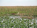 Everglades R02.jpg