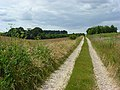Farm track, Berwick St James - geograph.org.uk - 491472.jpg