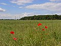 Farmland, Bisham - geograph.org.uk - 849581.jpg