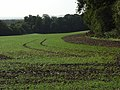 Farmland, Poughley - geograph.org.uk - 257538.jpg