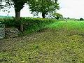 Farmland north of the A40, near Pwll-Trap - geograph.org.uk - 1317650.jpg
