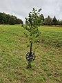 Felge an Baum 20190930 003.jpg