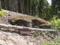 Felsen in der Dehl (Hoch-Weisel) 05.JPG