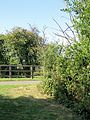 Fence and road verge at Hatfield Broad Oak Essex England.jpg