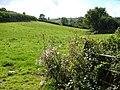 Field beside Well Cross - geograph.org.uk - 234612.jpg