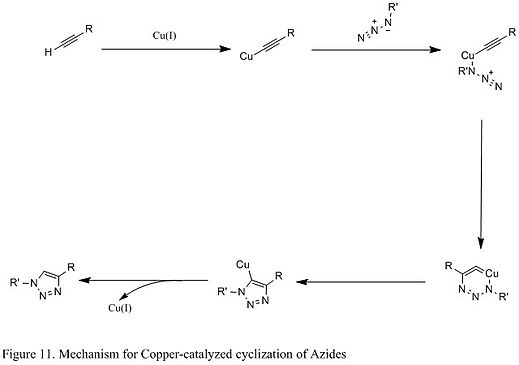 Figure 11. Mechanism for Copper-catalyzed cyclization of Azides.jpg