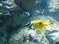 Fish in the aquarium at World Museum Liverpool (3).JPG