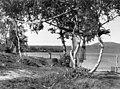 Fiskegarn hengt til tørk på stokker mellom trær, hos skoltesamer. Sevettijärvi 1959 - Norsk folkemuseum - NF.06209-001.jpg