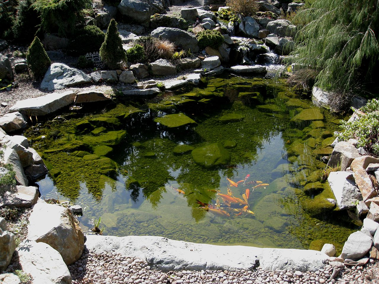 File flickr brewbooks koi pond 1 jpg wikimedia commons for Koi fish pond size