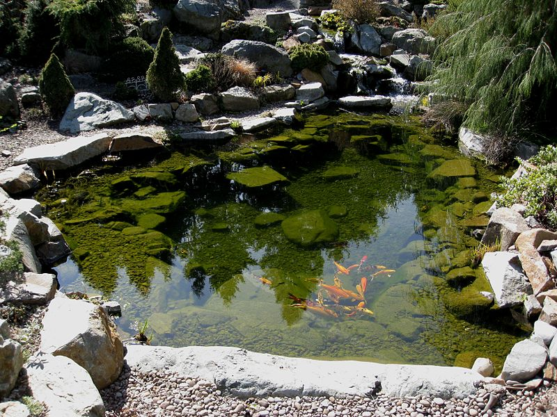 File:Flickr - brewbooks - Koi Pond (1).jpg