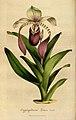 Flore des serres et des jardins de l'Europe - vol. 04 - page 375.jpg