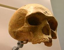 Homo Sapiens Alter