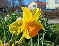 Flower 3597-2.jpg