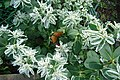 Flower and butterfly B01.JPG