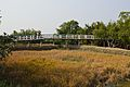 Footbridge - Sundarban Biodiversity and Interpretation Area - Taki - North 24 Parganas 2015-01-13 4746.JPG