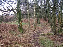 Footpath by Duddon Mosses - geograph.org.uk - 1097683.jpg