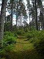 Footpath in Strathyre Forest - geograph.org.uk - 869835.jpg