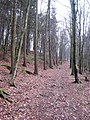 Footpath through Rag Path Wood, near Esh Winning - geograph.org.uk - 346072.jpg