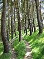 Footpath through woodland above Hartington - geograph.org.uk - 517566.jpg
